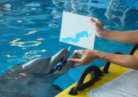 Favorites To Do:  The Clearwater Marine Aquarium
