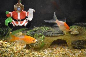 fish at Veronicas_small