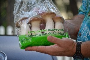 King Oyster Mushrooms_small
