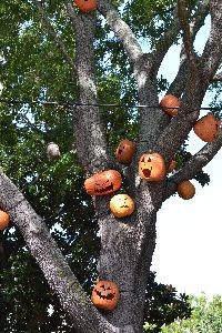 Pumpkins in the trees_small