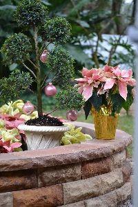 Backyard topiary_small