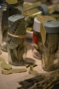 Bay Leaves_small