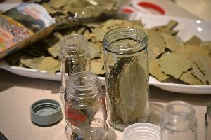 choosing bay leaves for the jars_small