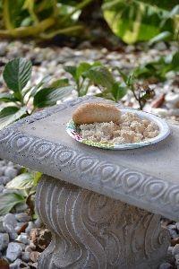 bread for the birds_small