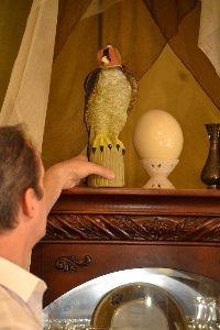 Gordon and the falcon_small