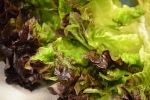 lovely crunchy lettuce_small