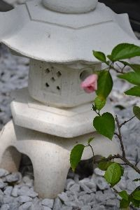 Hibiscus and Lantern_small