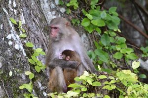 beautiful mother and child_small