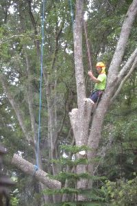 cutting down that tree_small