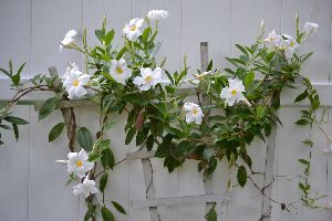 pretty flowing vines with flowers_small