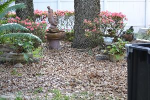 Florida spring is when we lose our leaves_small