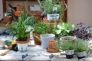 Potting bench gifts background_small