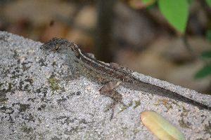cute lizard break_small