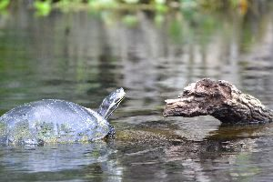 I do love the turtles_small