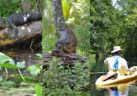 Silver Springs, Florida and The Creature From The Black Lagoon