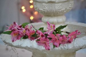 fountain flowers_small