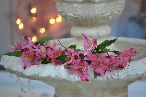 our-backyard-fountain-with-flowers_small