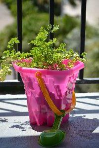 beach bucket parsley_small