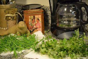 washing herbs for my Italian spread_small