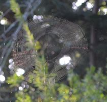 close up spider web_small