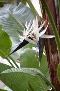 bird of paradise front yard_small