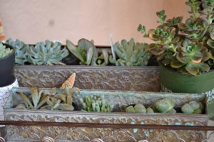 my succulents for wreath_small